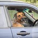 I'm dogged driving... by Sharon Robertson
