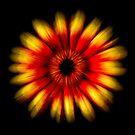Gerbera Explosion by George Kypreos