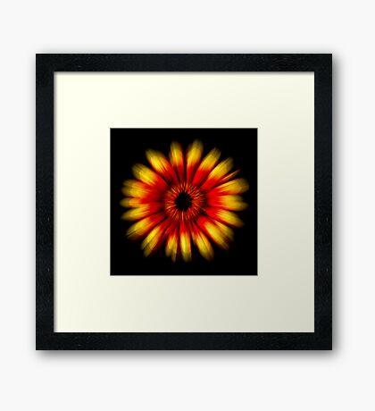 Gerbera Explosion Framed Print