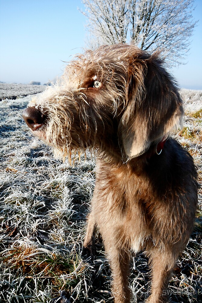 Dog needs de-icing  by SWEEPER