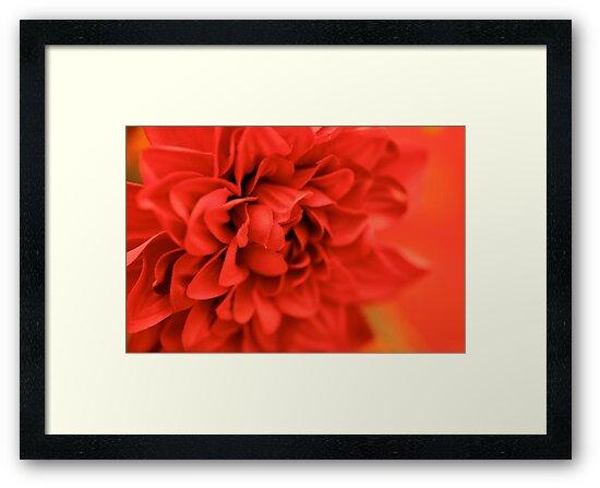 Fabulous Flower by Nadine Rippelmeyer