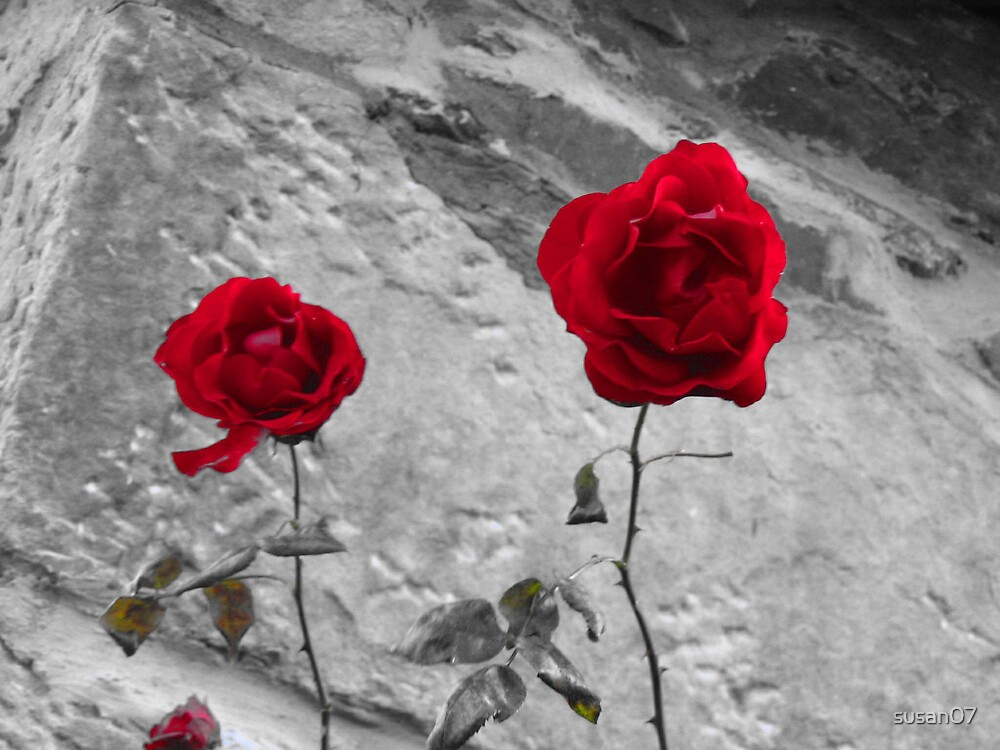 Red Roses - Town of Luss by Susan  McDonald