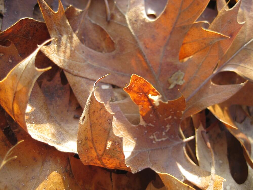 Oak Leaves by Elizabeth McCoy