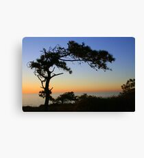 Pine Tree Silhouette at Sunset Canvas Print