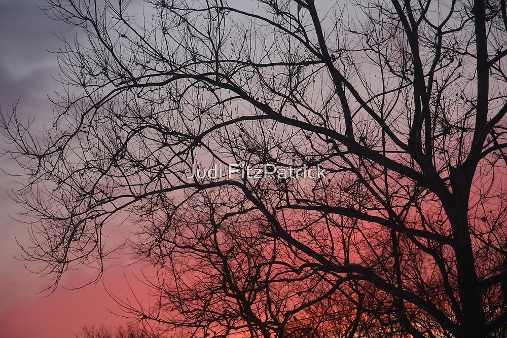 Sunset 4285 by Judi FitzPatrick