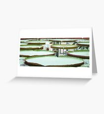 Lilly pad on a lake  Greeting Card