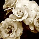 sepia roses by thedelicion