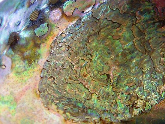 Abalone by May Lattanzio