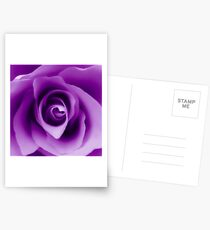 Purple Rose Postcards