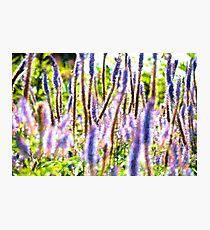 Summer Floral Photographic Print
