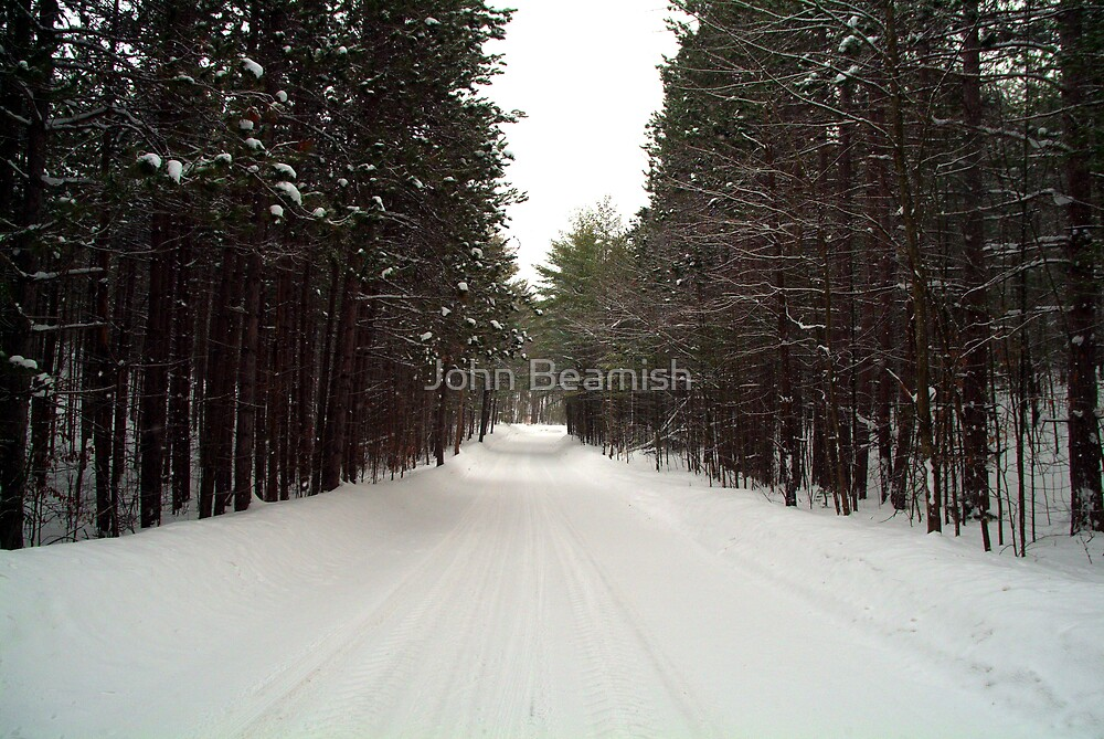 Road Through Forest by John Beamish