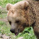 Happy Brown Bear by CreativeEm