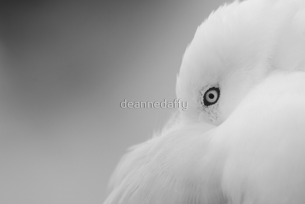 Pure by deannedaffy
