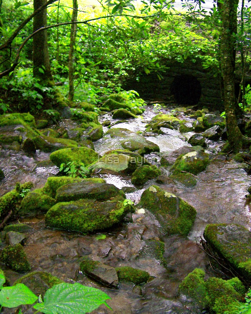 Mossy Brook by Lisa Taylor