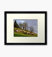 Brown and white cows on the sun, calm and tranquil pasturage, Pyrenees, France Framed Print