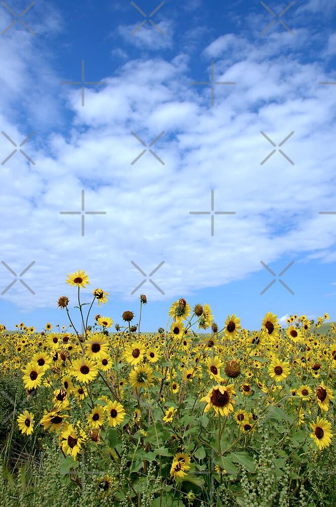 Brown-Eyed Susans by Brian R. Ewing