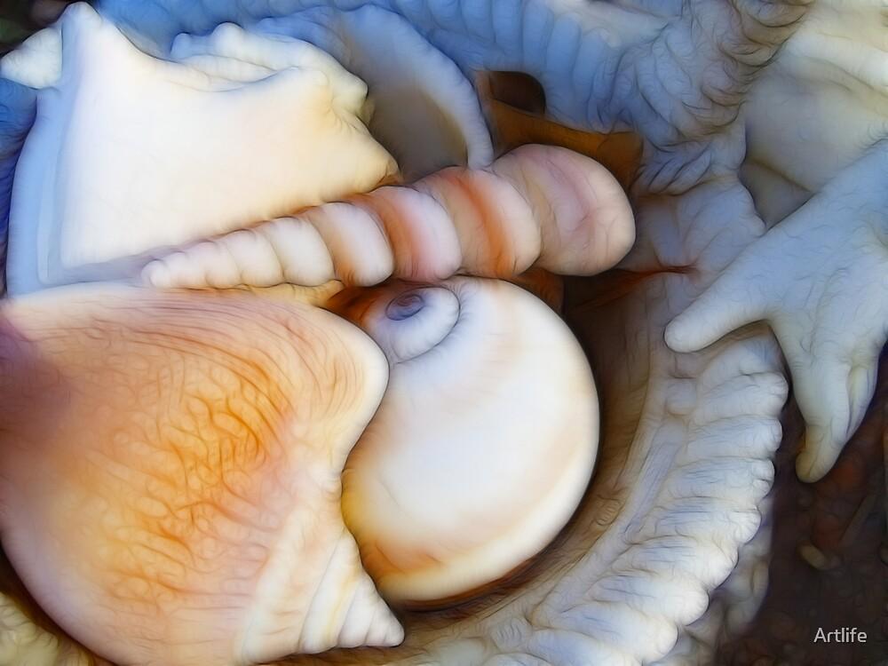 Basket of Seashells by Artlife