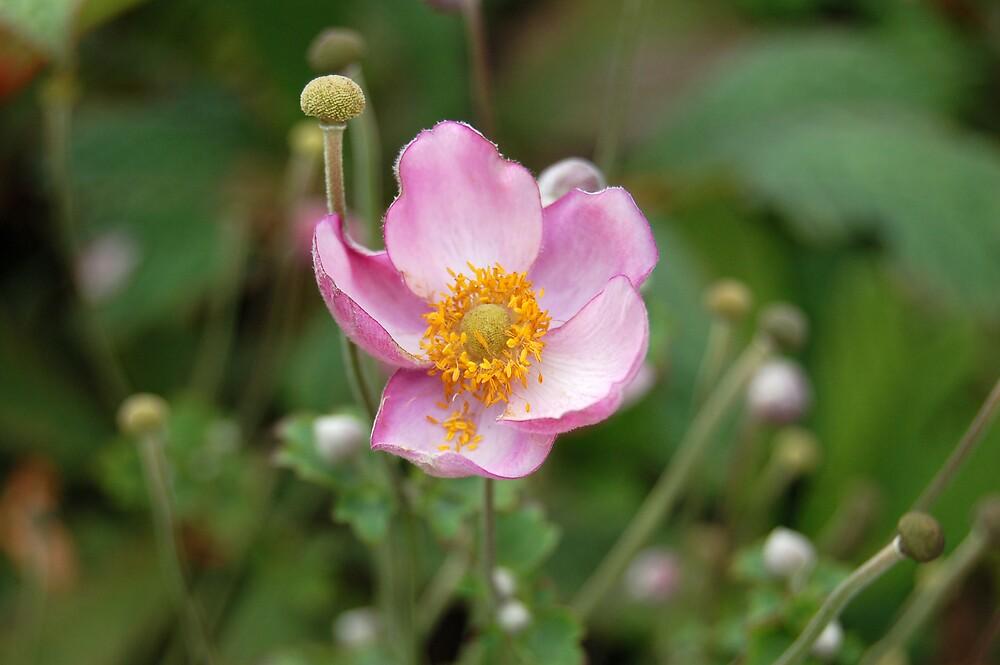 flower by swimchk512