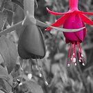 Pink by Joeltee