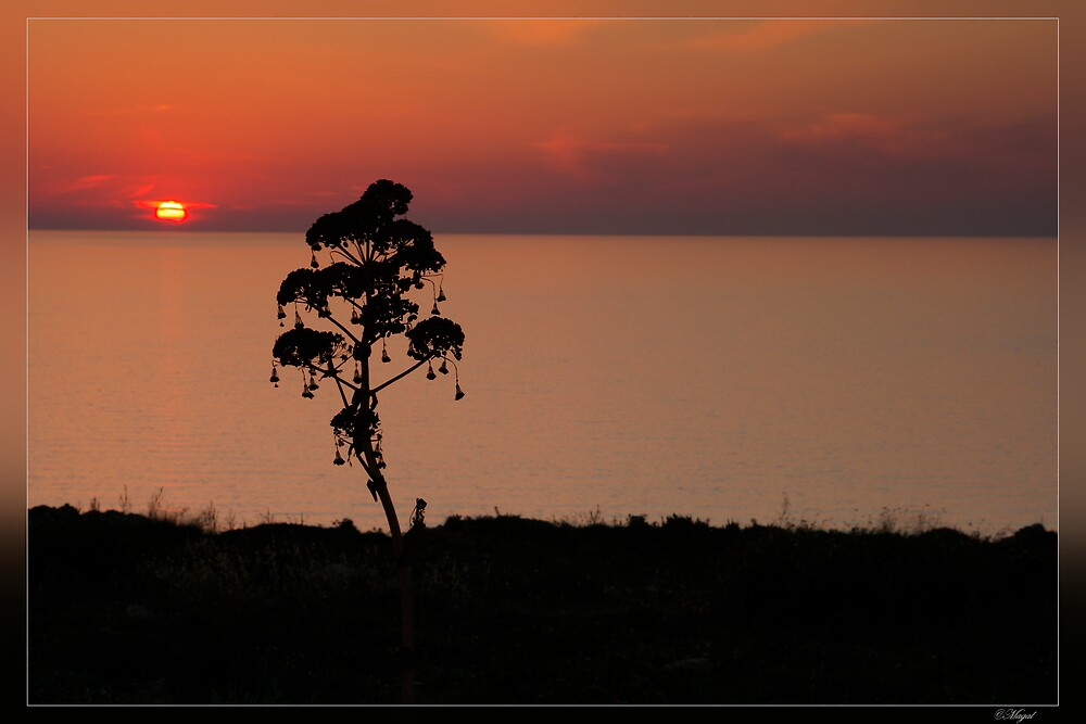 Sunset silhouette by magal