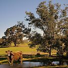 How now brown cow. 1000 views at 17 February 2013 by georgieboy98