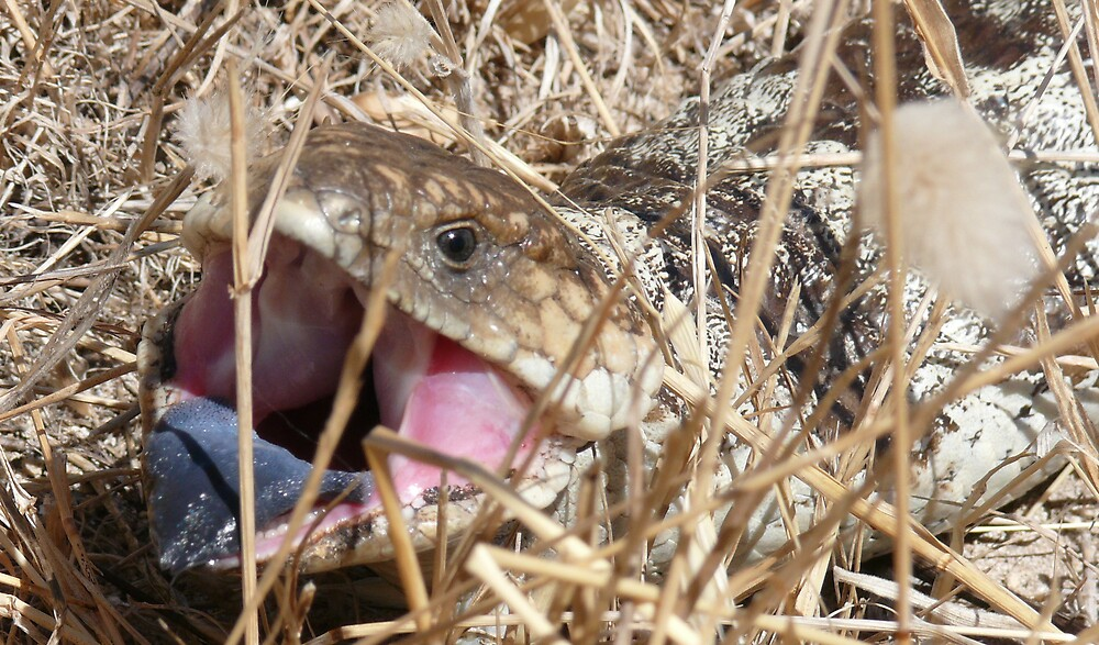 blue tongue goanna by robinof