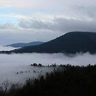 Evening Fog Coming In by Karen Kaleta