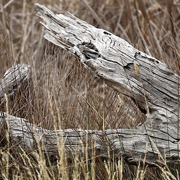 Dead Log by guitarchick666