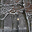March Snow in New York City  by Alberto  DeJesus