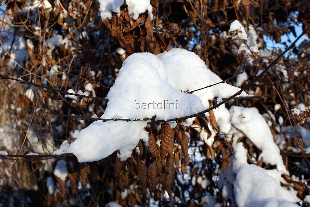 Leaves and snow by bartolini