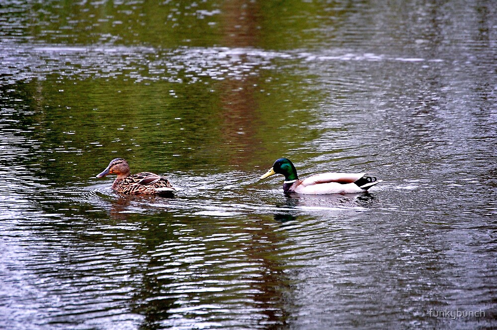 ducks by funkybunch