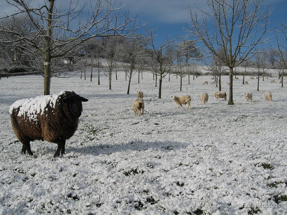Snowy Sheep by FarmMostyns