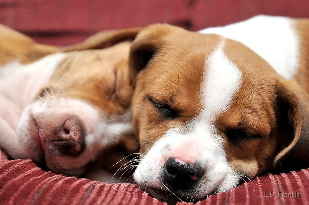 Sleeping Puppies by L.D. Franklin