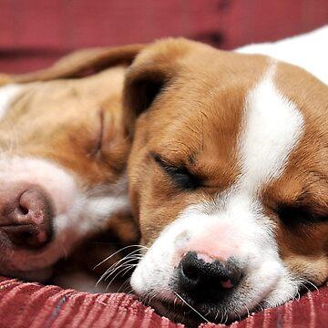 Sleeping Puppies by TrickiWoo