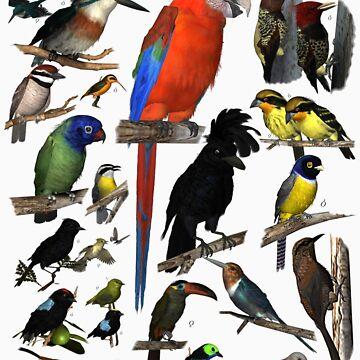 Birds of the Amazon by empken