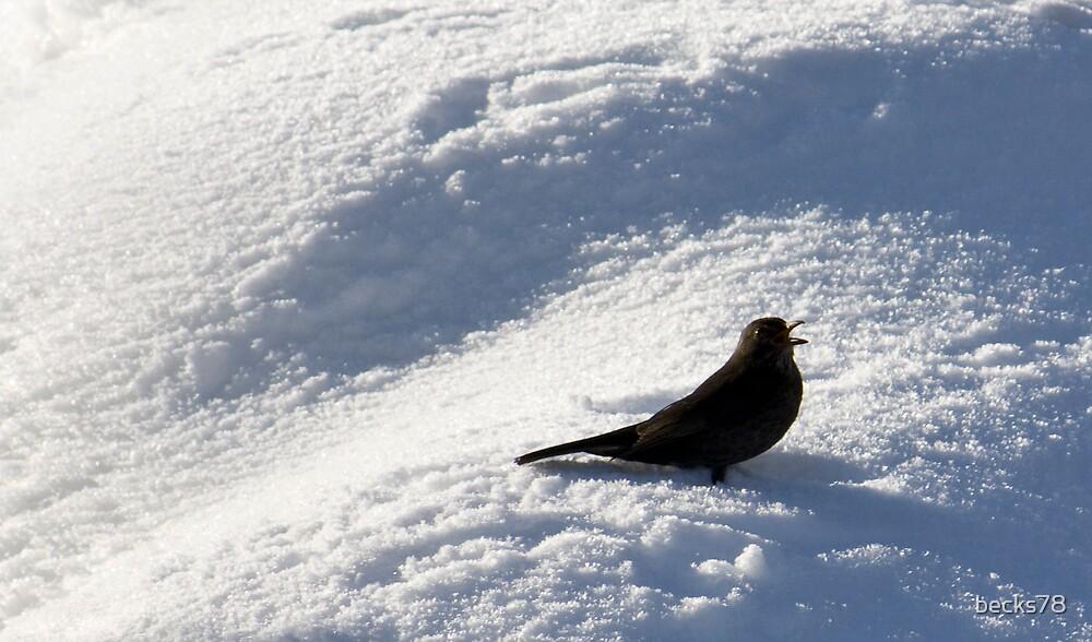 Blackbird on the snow by becks78
