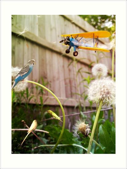 Birds of Paradise by Charli Varboncoeur