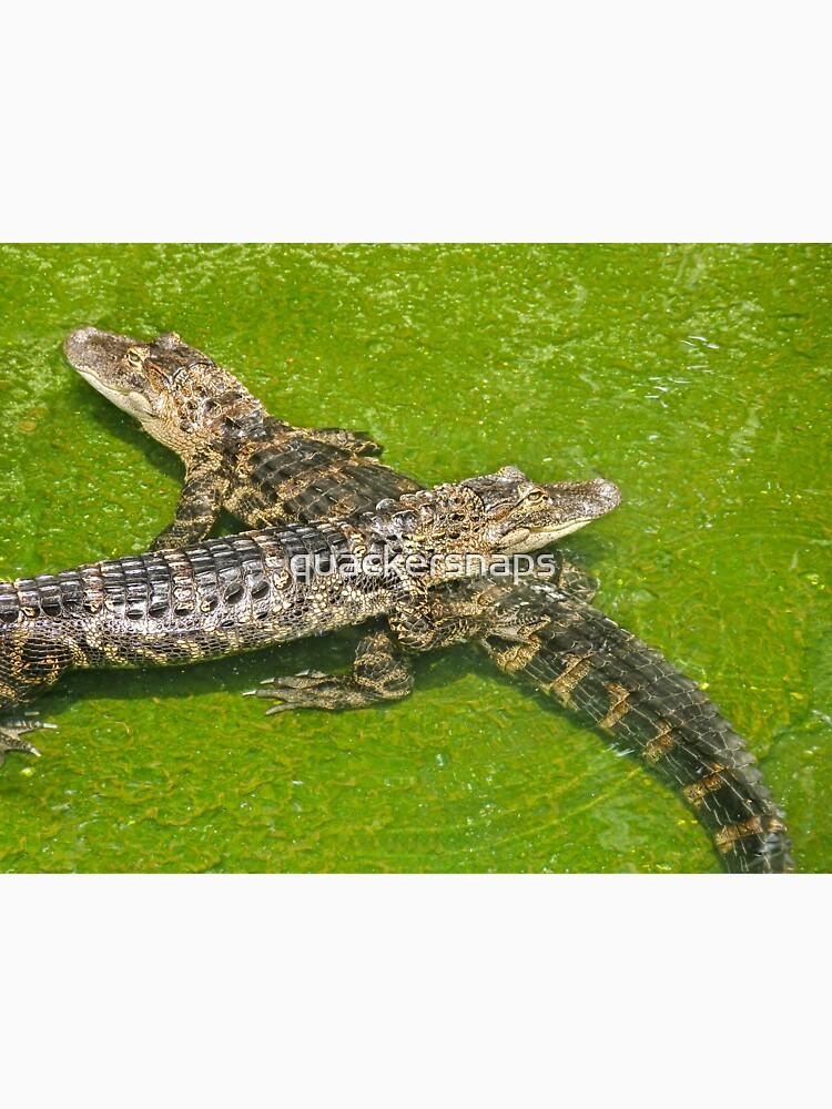 Alligators by quackersnaps