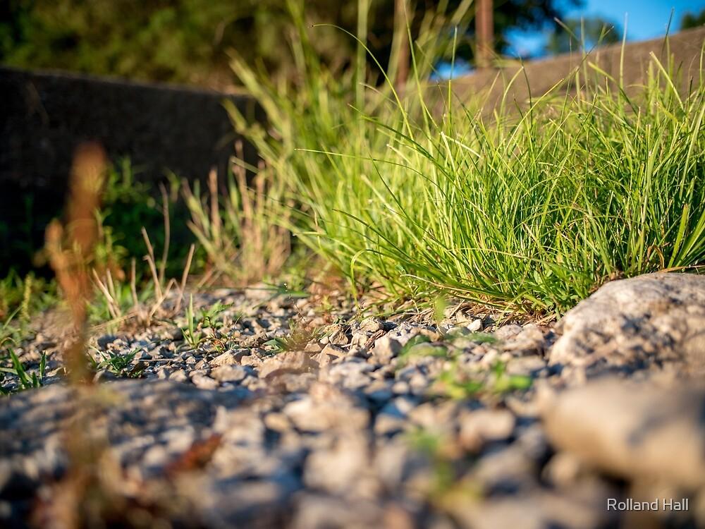 Summer Grass by Rolland Hall