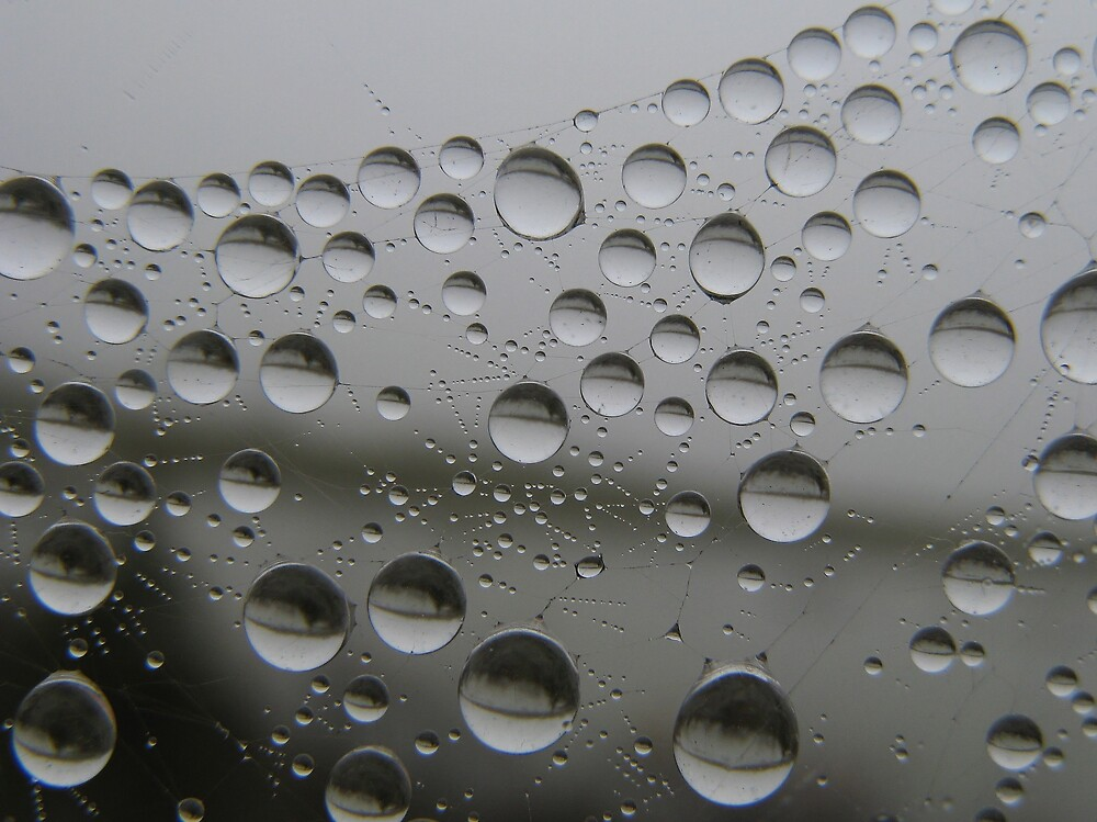 Dew Drops by Corey Bigler