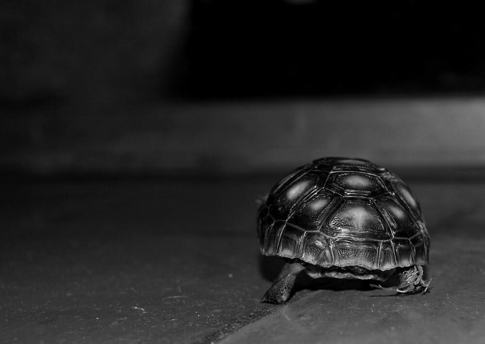 Turtle Butt by Jennifer Suttle