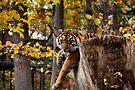 Autumn Tiger  by Elaine Manley