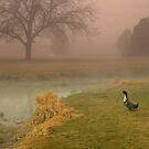 Lone duck by Cricket Jones