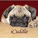 Cute iCuddle Pug Puppy Art, iPhone & iPad Cases by Patricia Barmatz