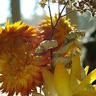 A little bit of Sunshine by Maureen Kay