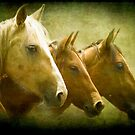 Brumbies Three by Clare Colins