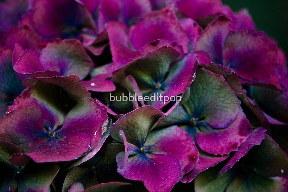 Vivid Flowers by bubbleeditpop