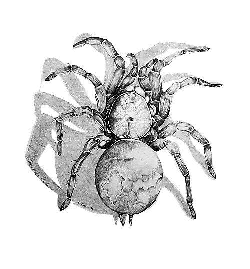 Arachnophobia by emilyb306