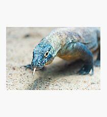Close-up of a Komodo dragon  Photographic Print