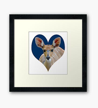 Bushbuck portrait 3 Framed Print